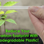 Clear Plastic Biodegradable Straws